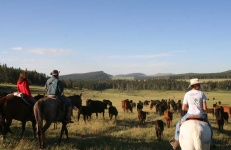 guest-ranch-wyoming-vacation
