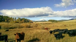 reasonable-rates-guest-ranch-wyoming